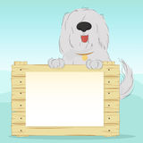 Dog holds the wooden surface with empty blank for your text. Large, shaggy dog breed Bobtail on a blue background holding a wooden surface. Blank document for Stock Image