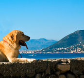 A dog in holiday. A dog looking at the horizon stock photos