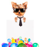 Dog with Holiday banner and colorful balloons Stock Photo