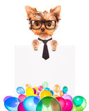 Dog with Holiday banner and colorful balloons Stock Images