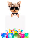 Dog with Holiday banner and colorful balloons Royalty Free Stock Images