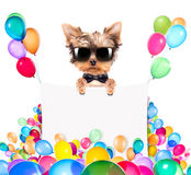 Dog with Holiday banner and colorful balloons Royalty Free Stock Photos