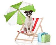 Dog at holiday Stock Photos