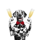 Dog on a holiday with a glass of champagne Stock Photos