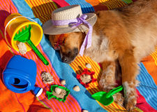 Dog on holidays. Dog with sunglasses is relaxing on the beach Stock Images