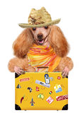 Dog on holidays with luggage Royalty Free Stock Photos