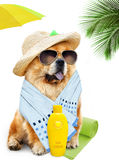 Dog. Holidays at sea Royalty Free Stock Photography