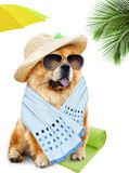 Dog. Holidays at sea Stock Photography