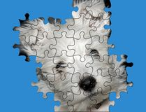 Dog home puzzled. Dog from home...a happy friend Royalty Free Stock Photography