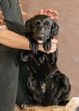 Dog from a homeless animals shelter Stock Images