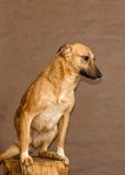 Dog from a homeless animals shelter Stock Photos