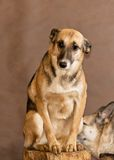 Dog from a homeless animals shelter Royalty Free Stock Photography