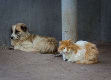 Сat and dog. Homeless comrades, cat and dog Royalty Free Stock Photo