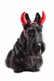 Dog with horns Stock Photo