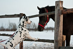 Dog and horse Royalty Free Stock Photo