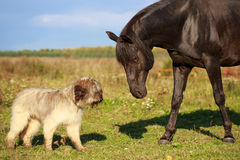 Dog and horse Stock Photos