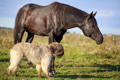 Dog and horse Royalty Free Stock Photos