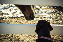 Dog and Horse Meeting Royalty Free Stock Image