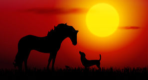 Dog and horse. Vector dog and horse silhouette on sunset Royalty Free Stock Photos