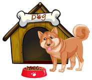Dog and house Royalty Free Stock Images