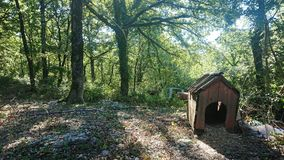 Dog house. An old Dog house inside a forest royalty free stock photos