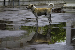 Dog house. With puddles in the shadows royalty free stock photos