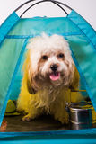 Dog house  in tent design picnic Stock Image