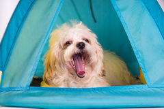 Dog house  in tent design Royalty Free Stock Photography