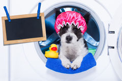 Dog housework chores. Dog inside a washing machine ready to do the chores and homework or housework and clean the  dirt, wearing a shower cap , towel and rubber Stock Photos