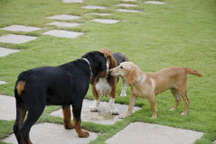 Dog Huddle Stock Images
