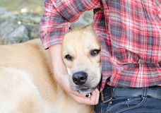 Dog in hug. Sweet hug for lovely dog Royalty Free Stock Photos