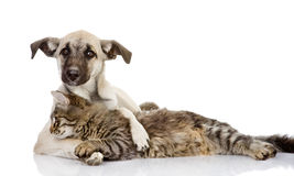 The dog hugs a cat.