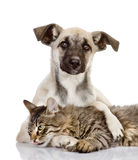 The dog hugs a cat. Royalty Free Stock Photo