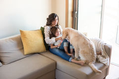 Dog with human family at home. Golden Retriever Junior dog with her human family at home Royalty Free Stock Photography