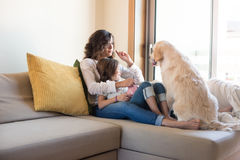 Dog with human family at home. Golden Retriever Junior dog with her human family at home Royalty Free Stock Photos
