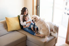 Dog with human family at home. Golden Retriever Junior dog with her human family at home Royalty Free Stock Image