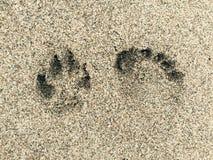 Dog and human footprint Stock Photography