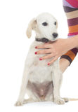 Dog and human hands Stock Photo