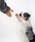 Dog and human handshake. Stock Images