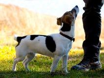 Dog and human Royalty Free Stock Photos