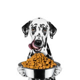 Dog is hungry and keeps the food Stock Photo