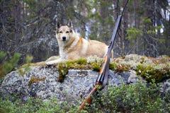Dog hunting Stock Photos
