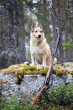 Dog hunting Stock Image