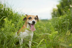 Dog hunting nature Royalty Free Stock Photography