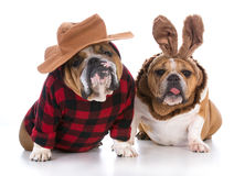 Dog hunting rabbit Royalty Free Stock Photos