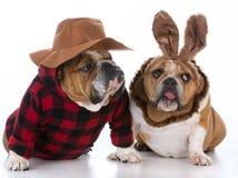 Dog hunting rabbit Royalty Free Stock Images