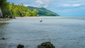 Dog hunting in Water during low Tide on Kri Island, Raja Ampat, Indonesia, West Papua Stock Photo
