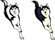 Dog Huskies. Vector illustration running dog Huskies Stock Photos