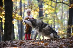 Dog husky with child on fresh air outdoor. Dog and little girl in autumn forest.  Royalty Free Stock Photo