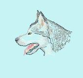 Dog husky head, pixel art style. Dog husky head pixel art style, design element Stock Photography